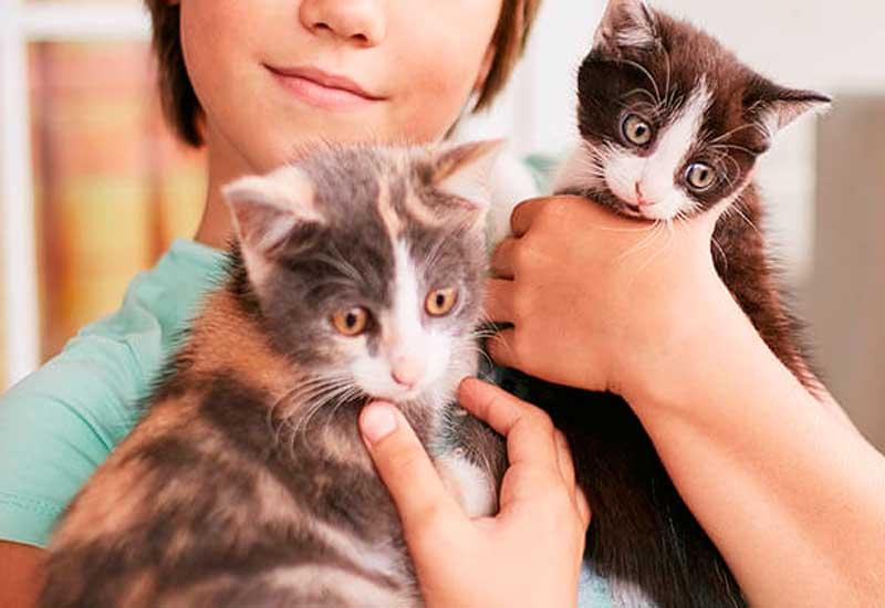 La primera visita al veterinario de tu gatito