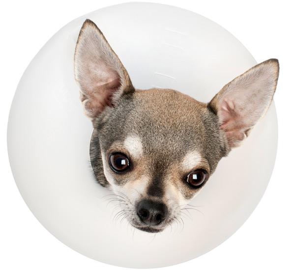 Bestioles Servicio de cirugía veterinaria para perros gatos y exóticos en Barcelona