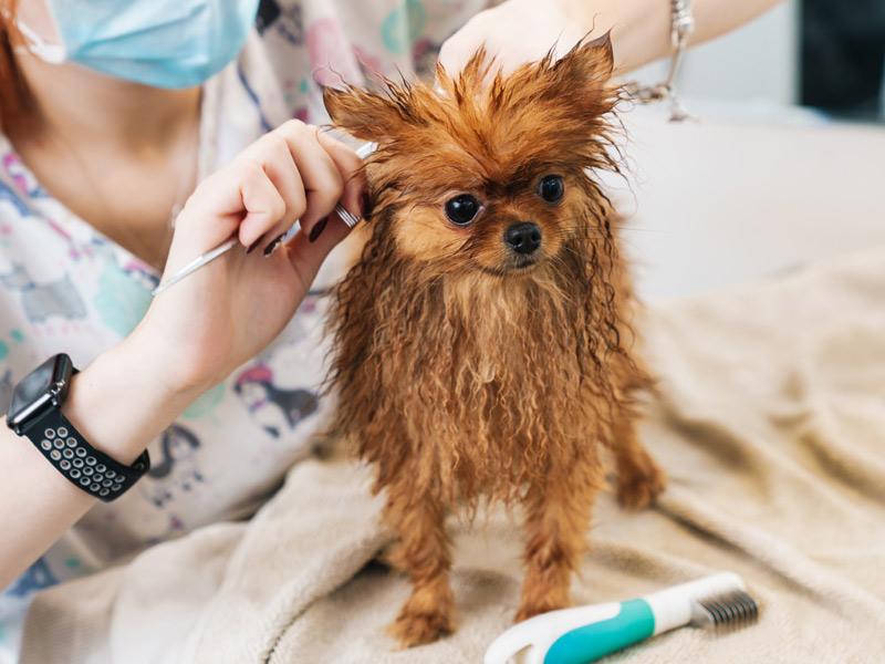 Peluquería canina y felina en Centro de estética para mascotas Bestioles